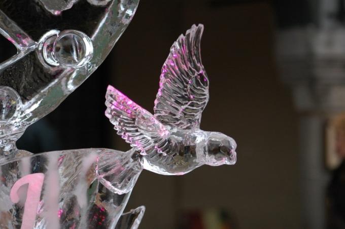 Ptak z lodu