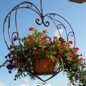 kwiaty ogród balkon