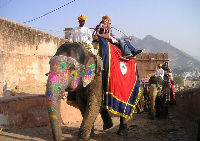 podróże indie słoń
