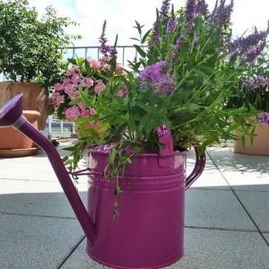 kwiaty podlewanie