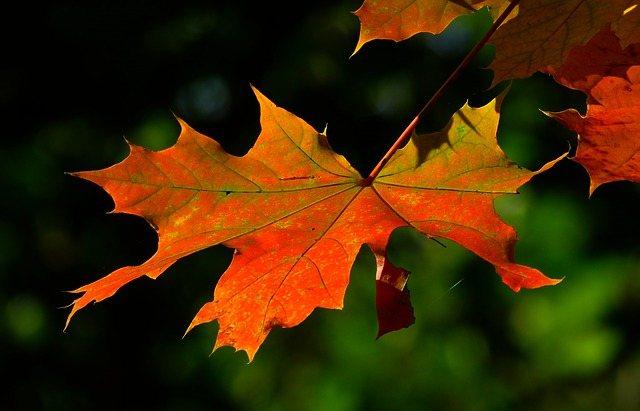 jesień liść