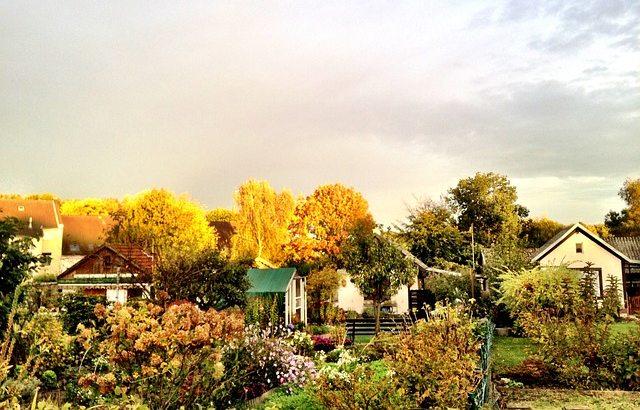 ogrod jesień