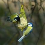 ptaki dokarmianie