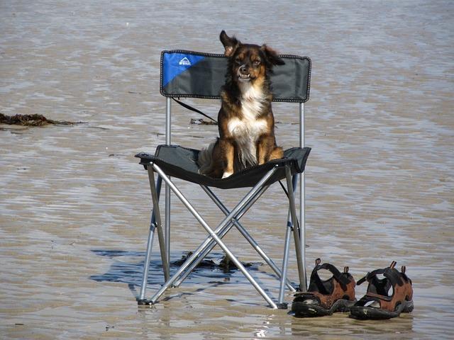 Wakacje z psem!