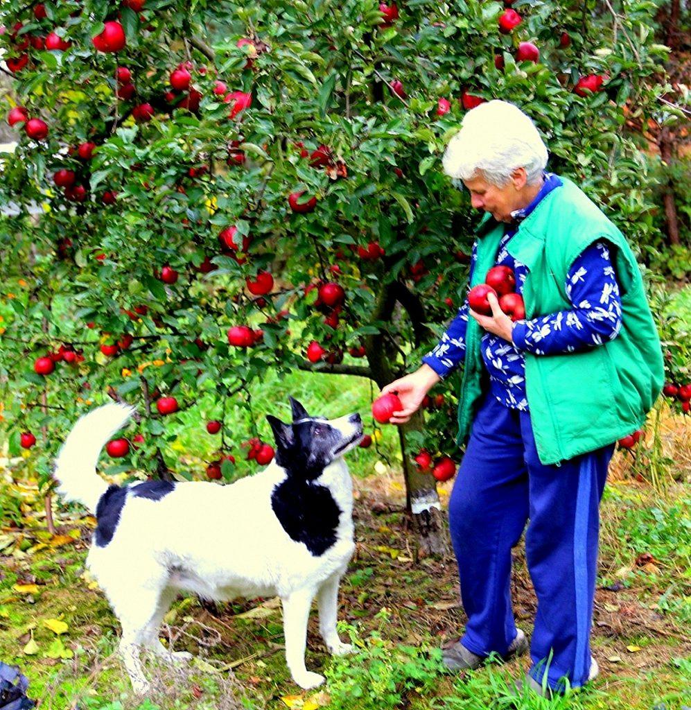 Pani Jadwiga w swoim ogrodzie