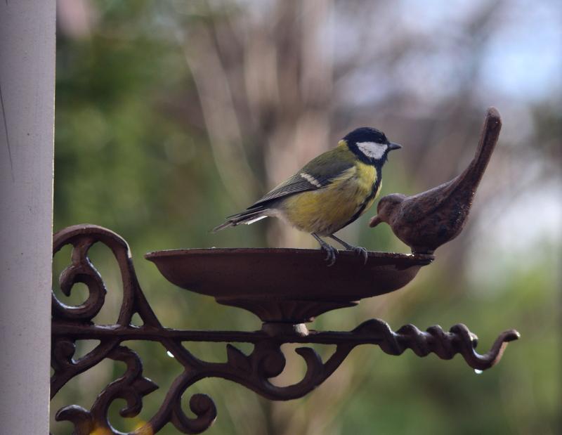 Ptak zimą przy poidełku