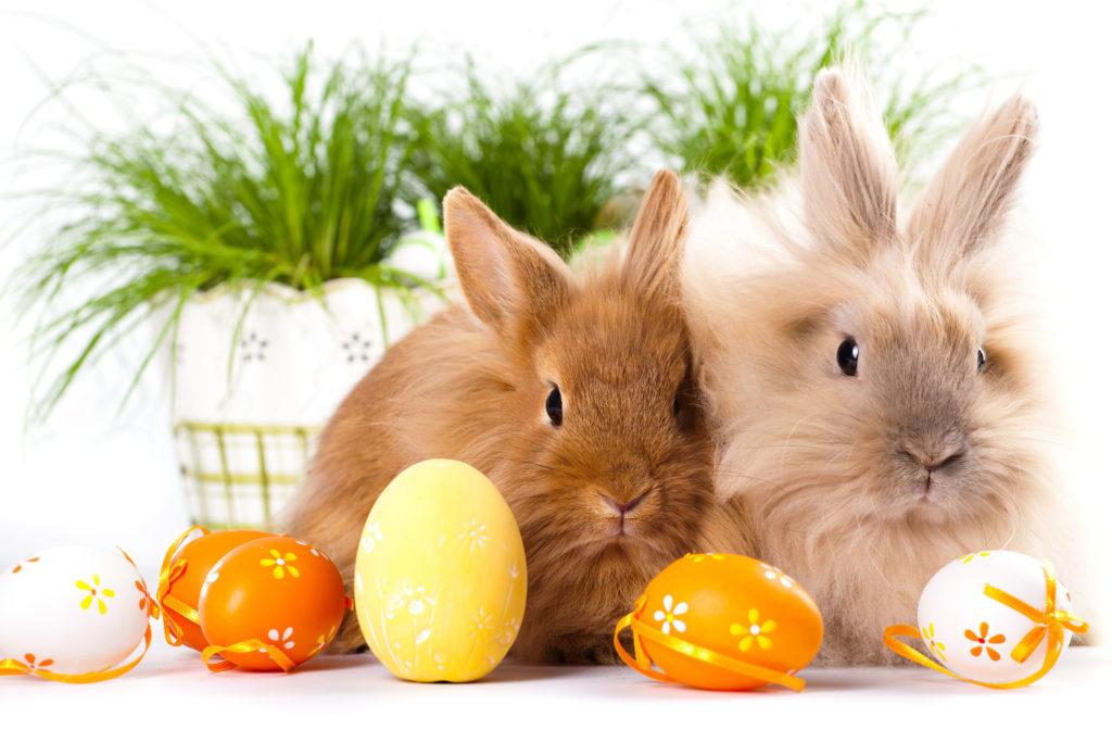 Życzenia Wielkanocne - Wielkanoc